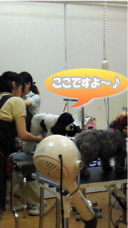 NEC_0655-2.jpg