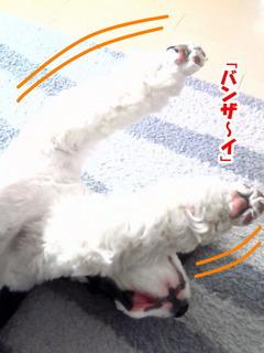 NEC_0570-2.jpg