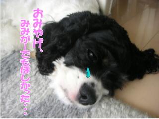 PICT0026-2.jpg